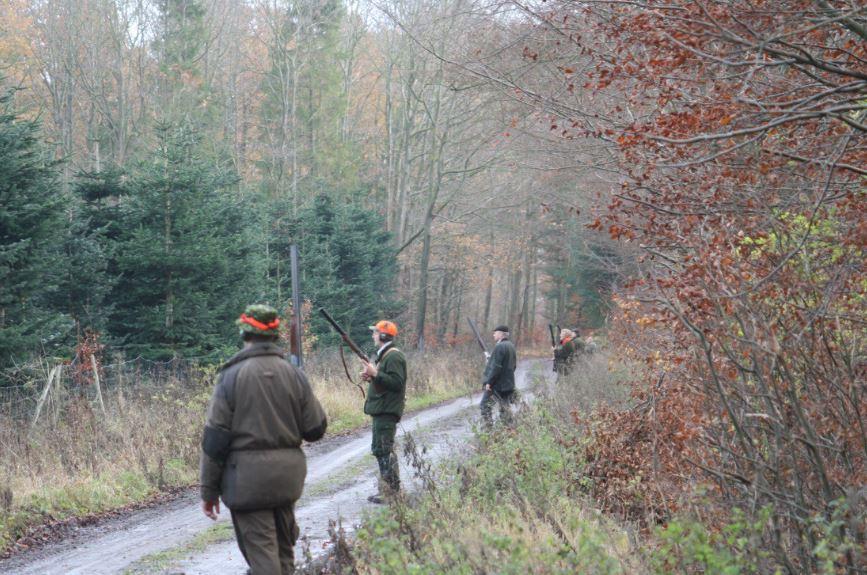 Jagt på fasaner for nye jægere